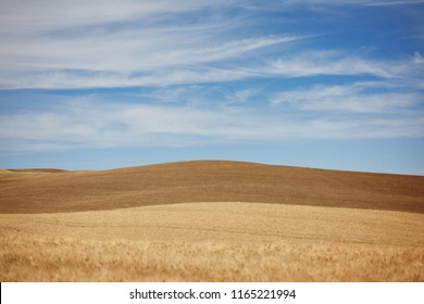 Ripe wheat fields landscape in Tuscany, Italy