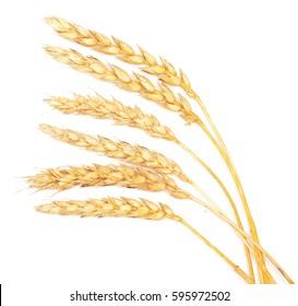 ripe wheat isolated on white background