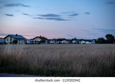 Ripe wheatfield with houses in the background after sunset