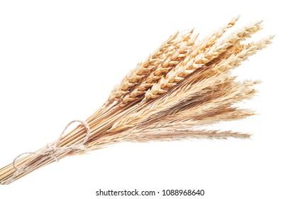 Ripe wheat-rye ears isolated on white