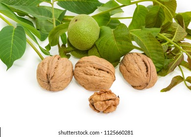 Ripe whole walnuts and one husked nut kernel on a background of walnut branches with leaves and unripe fruits on a white background