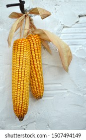 ripe yellow corn cobs hanging on the nail on the white wall