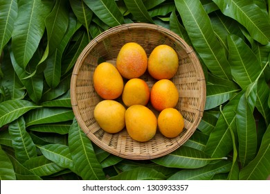 Ripe yellow mango in basket on tropical green leaf background, top view