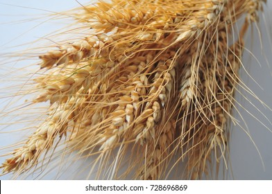 Ripe yellow wheat stalks on the table
