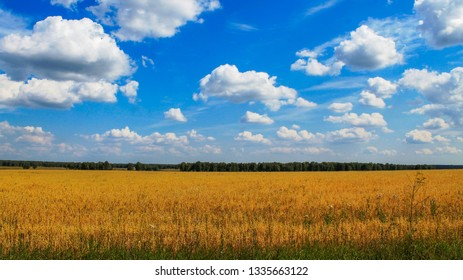 The ripening of the crops in the fields