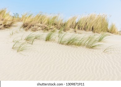 Rippled white sand dunes with marram grass growing on top on a sunny day and a blue sky above. Coastal landscape in the near Ouddorp in the Netherlands.