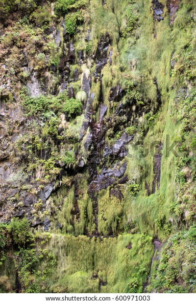 Risco Waterfall of the Twenty-five Fountains Levada hiking trail, Madeira Portugal