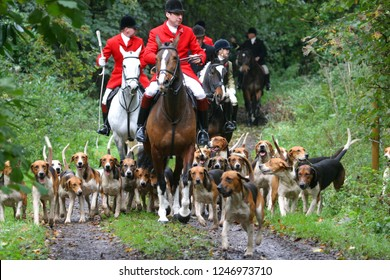 RISE, EAST YORKSHIRE, UK : 2 NOVEMBER 2013 : The Master Of Hounds leads the hunt and Old English Foxhounds down a leafy lane near Rise Village in the countryside of East Yorkshire