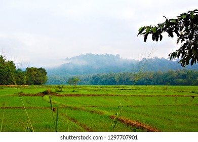 Rise fields natural countryside landscapes in around Kandy, Sri Lanka