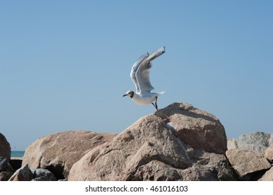 rise over the sea gull