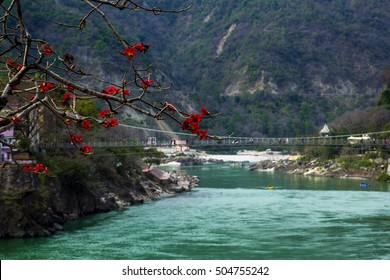 RISHIKESH, INDIA - view to Ganga river and lakshman jhula from cafe under magnolia tree