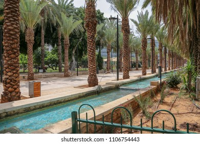 Rishon Le zion, Israel - May 15, 2018 - Palms trees in the park