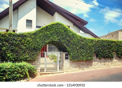 Rishon LeTsiyon, Israel-August 13, 2013: The private sloped roof cottage with white facade has a wall fence with growing trimmed bushes on top.