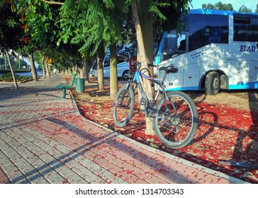 Rishon LeTsiyon, Israel-June 28, 2013: Shadow sidewalk with trees on both sides runs along the bus parking lot. A blue bicycle shackled to a tree stands on the tree bed covered with red fallen blossom