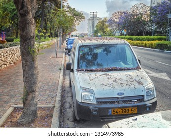Rishon LeTsiyon, Israel-May 16, 2013: A hatchback Ford has been parked at the pavement for a long time and fallen leaves and blossoms of the jacaranda tree cover it with a layer of violet brown husk.