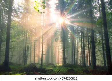 rising after rain warm old dense forest shrouded in mist with sunshine rays. High beech, hornbeam, fir rosy very beautiful and fabulous. Ukraine Carpathian peaks are known for their primeval