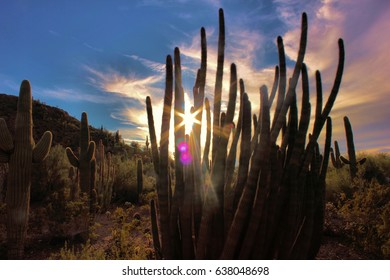 Rising behind the cactus