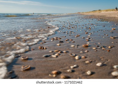 Rising floods and running water cover white and brown North Sea shells on sandy ground. typical beach scene on the Dutch coast for background or dynamic nature scene
