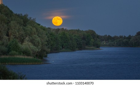 Rising full moon over the tree tops and river Daugava in Riga, Latvia. Impressive huge, orange full moon shining in dark blue sky. Green forest next to river at night time.