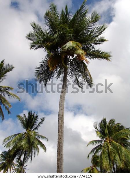 Rising palm trees