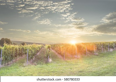 The rising sun over vineyards. Czech republic, grand moravia.