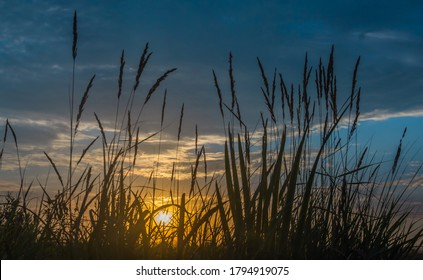 Rising sun shines through the silhouette of field grasses against a blue sky with clouds