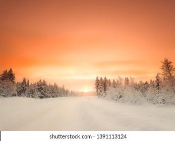Rising sun. Snow landscape in Lapland, Sweden. Orange sky above conifers in white winter scene.