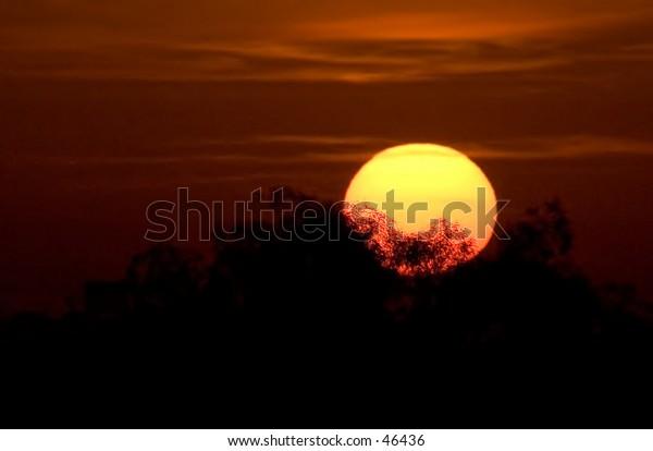 Rising Sun through distant trees