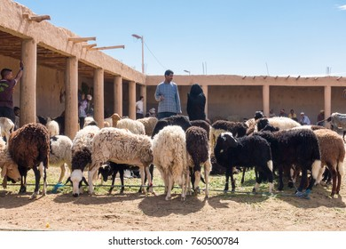 Rissani, Morocco -  May 09, 2017:Two Moroccans are looking at sheep at the sheep market in Rissani, Morocco, Africa.