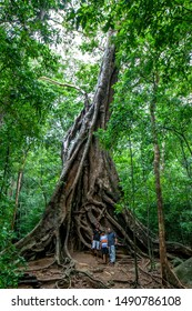 RITIGALA, SRI LANKA - AUGUST 17 : People stand next to a 1400 year old banyan tree (ficus benghalensis) at the ancient ruins of Ritigala.