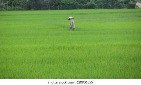 Rive field farmer