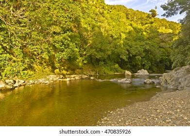 Rivendell, Kaitoke Regional Park, North Island, New Zealand