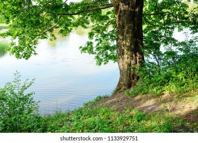 river bank with one tree on a wonderful summer day.