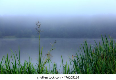 River bank with reeds and obscure the background, the sharpness in the foreground, morning.