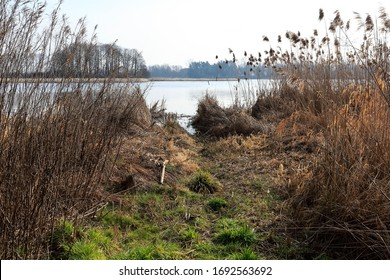 River bank with variety of grasses on it. This view can be seen by the Narew River in Poland.