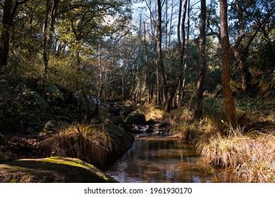 river-bed-trees-peaceful-atmosphere-260n