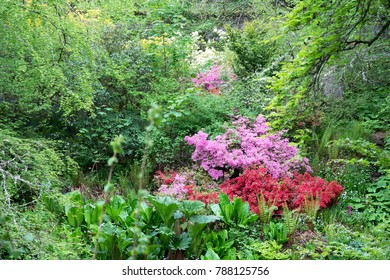 A River of Colourful Plants