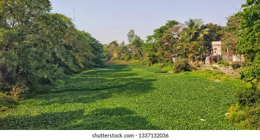 River covered with weeds and clear sky