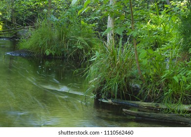 river creek water flowing stream green forest nature landscape