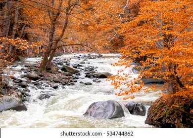 River deep in autumn mountain forest. Nature composition.