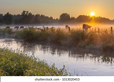 River the Dinkel with cows in field on bank in Twente on an early summer morning with haze over the countryside in the Netherlands