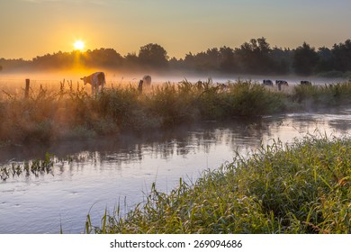 River the Dinkel in Twente on an early summer morning with haze over the countryside with cows in the Netherlands
