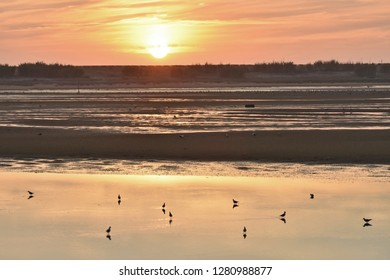 River Douro Estuary Natural Reserve,wetlands area with waterbirds at dusk near Porto Western Portugal Europe.