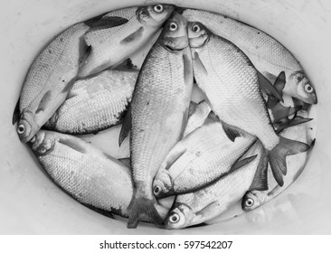 River fish on the bottom of a bucket