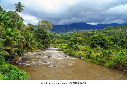 River flowing through dense tropical jungle on the Indonesian Sumatra island