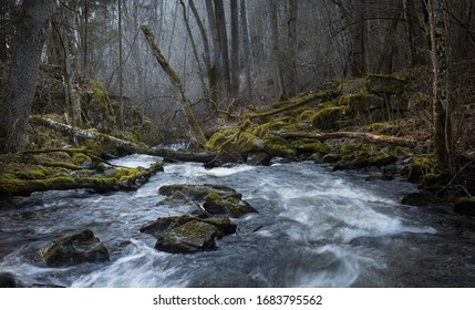 River flowing through a natural wilderness forest