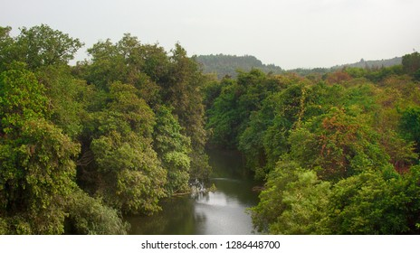 The river flowing through the rain forest, cloud forest of the Western Ghats, river floodplain. Lush greenery and many vines, biocenosis in tropics forests. India