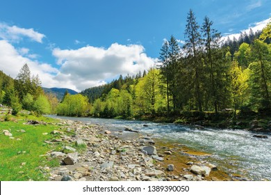 River flows among of a green forest at the foot of the mountain. picturesque nature of Carpathians  on a serene summer day under blue sky