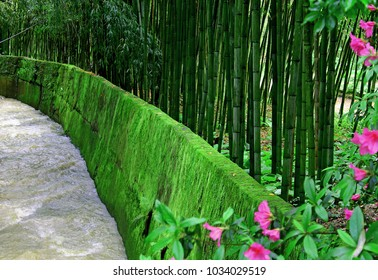 The river flows in bamboo park or tropical forest. Wall dam covered with moss and jungle pink flowers. Beautiful green nature landscape for wallpaper or tree background. Bambu grove with young stems