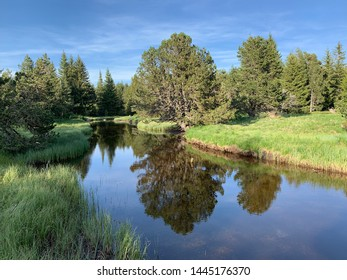 River in the forest french Pyrenees landscape
